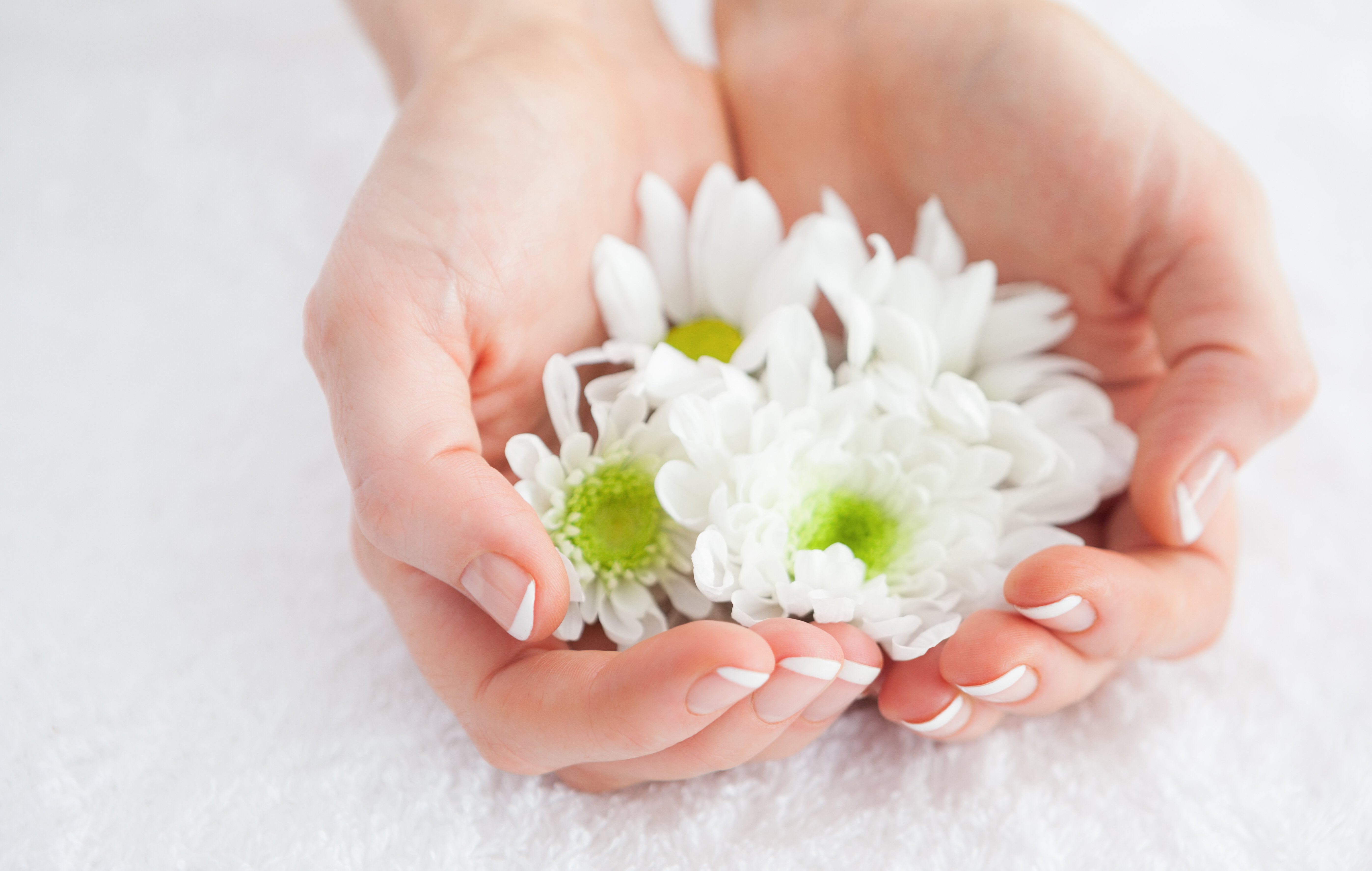 Close-up of french manicured hands holding flowers at spa center-1
